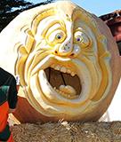 Half Moon Bay Pumpkin