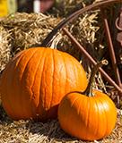 Ardenwood Harvest Festival