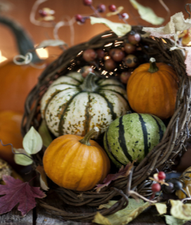 Pumpkins, Squash, and Gourds…Oh My!